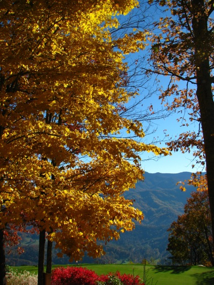 The Black Mountains behind a golden Hickory tree.  Taken by Daniel Manget