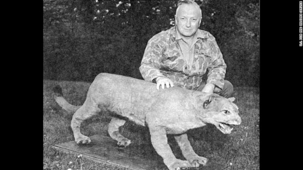 Credit: U.S. Fish & Wildlife Service. Canadian author Bruce Wright poses with what is believed to be one of the last eastern cougars (puma concolor cougar) killed.