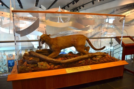 Credit: Penn State All-Sports Museum Caption: The Penn State Nittany Lion is believed to be an eastern cougar killed in the 1850s in Pennsylvania.