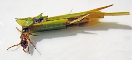 3821.Caddis Fly Larva 006 Small