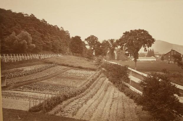 Shaker Gardens 1870s IMG_3636